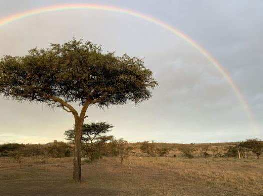 Acacia tree under a rainbow on the veld