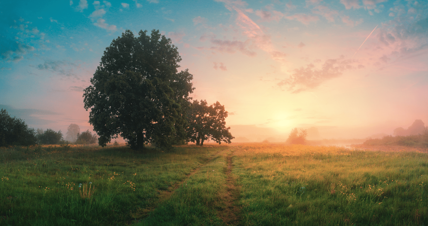 An image of a tree in a field at sunset.
