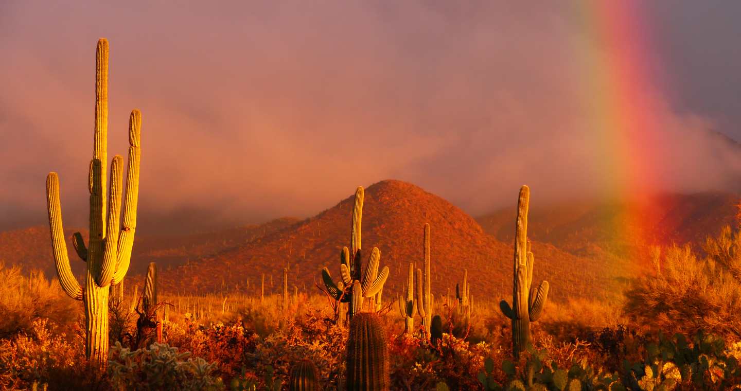 A person sits at the shore of a lake surrounded by evergreens, chin resting on their hand as though they are deep in thought.