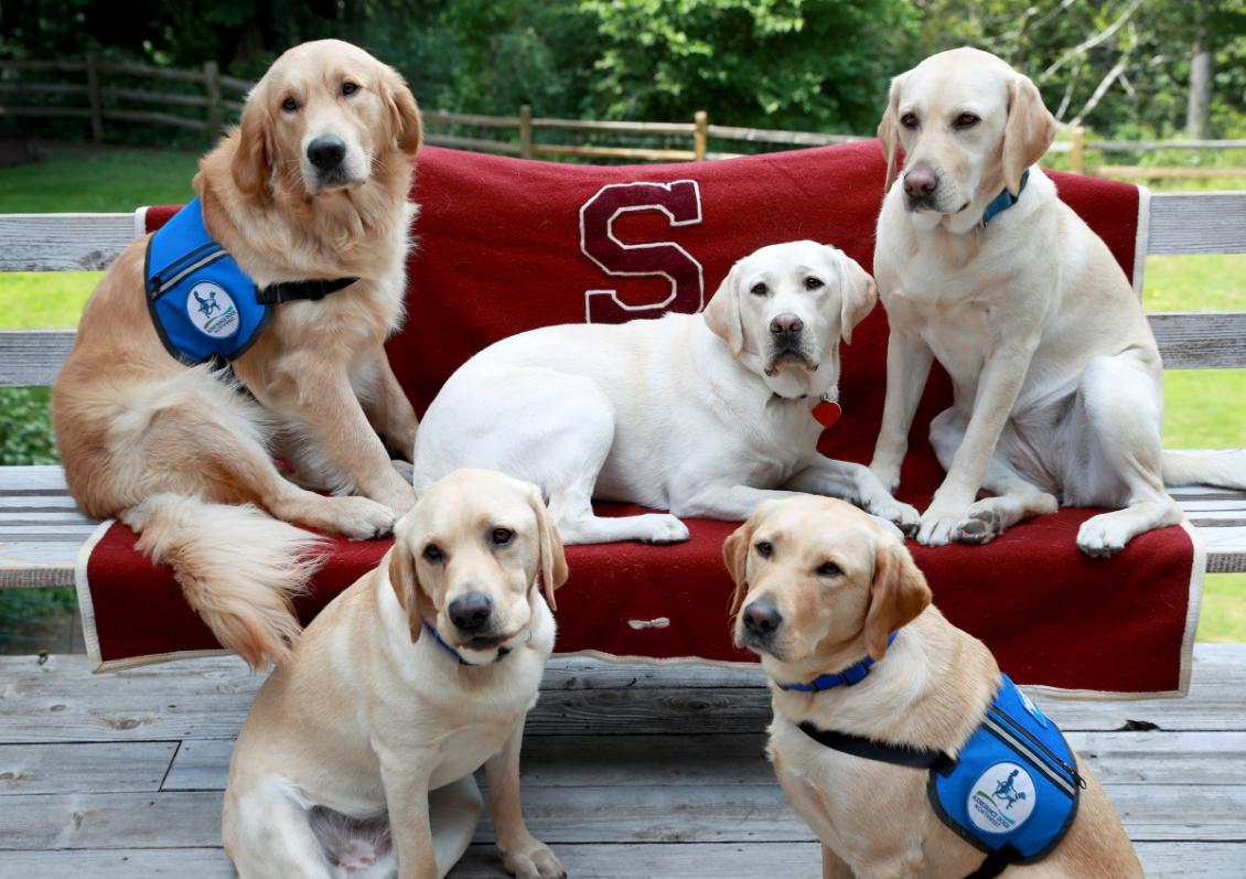 Photo of Assistance Dogs