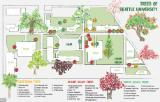 Tree Map of SU Campus