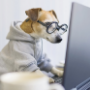 Dog wearing glasses looking at computer screen