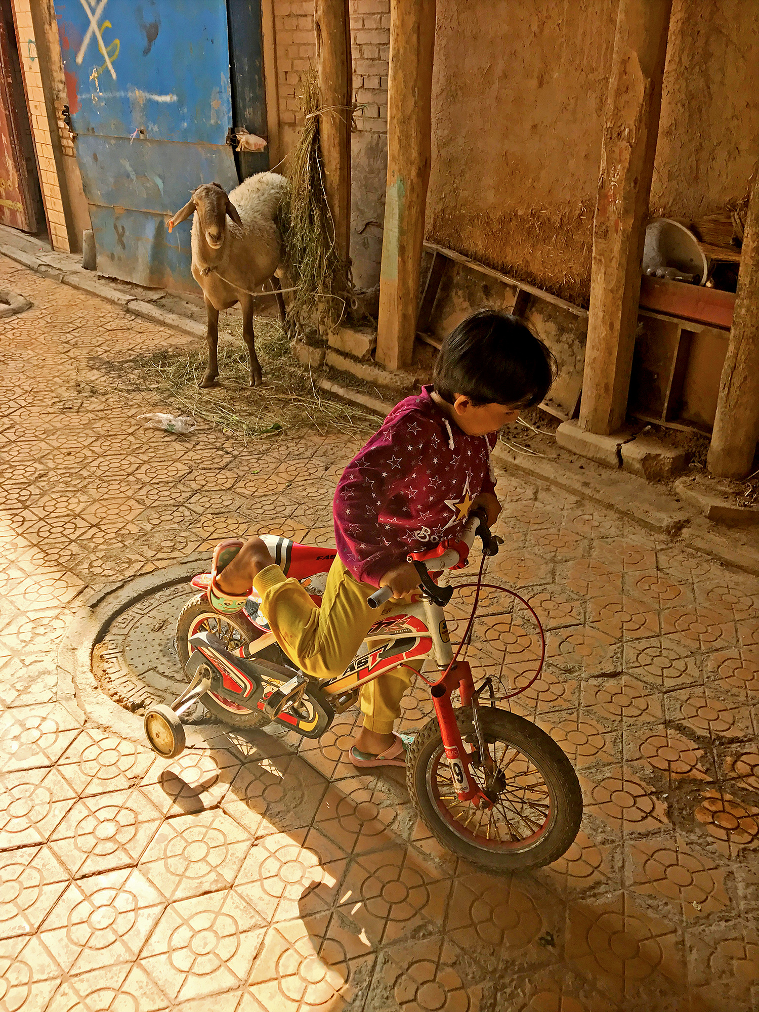 a child rides a bike with training wheels on a brick paved street while a goat watches from the side