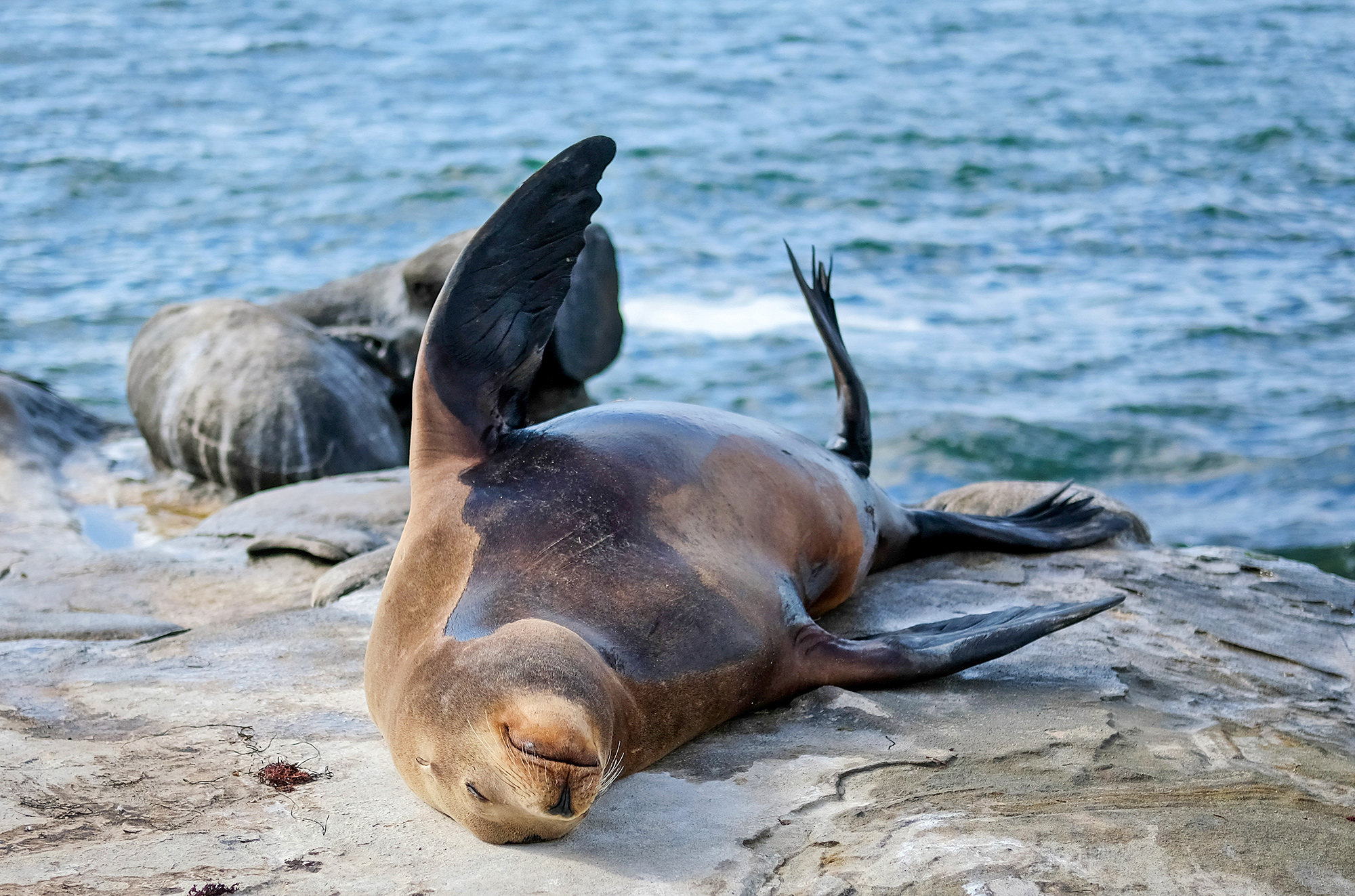 sea lions laying on the shore rocks